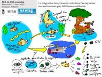 """VisioForum """"mon Projet Long de Recherche en 150 secondes"""""""