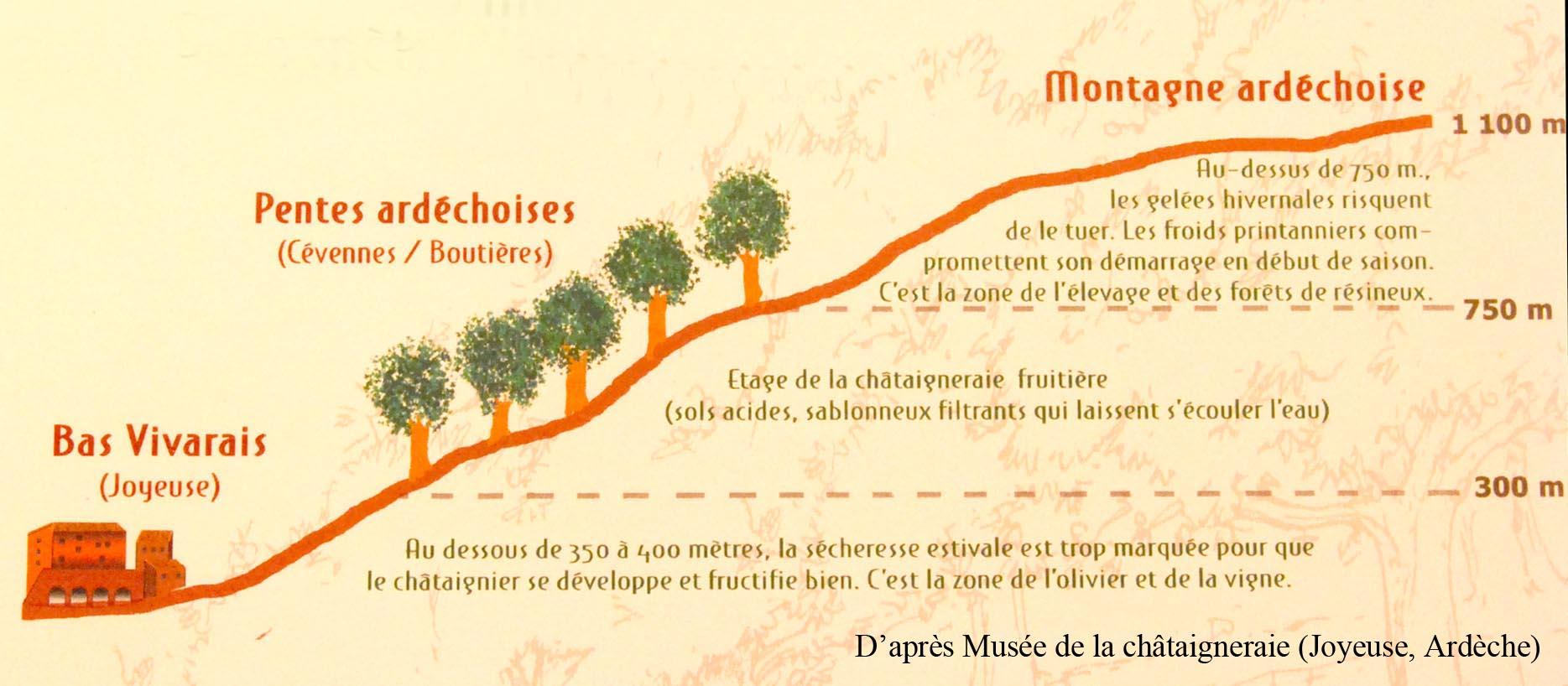 Ecologie Châtaignier