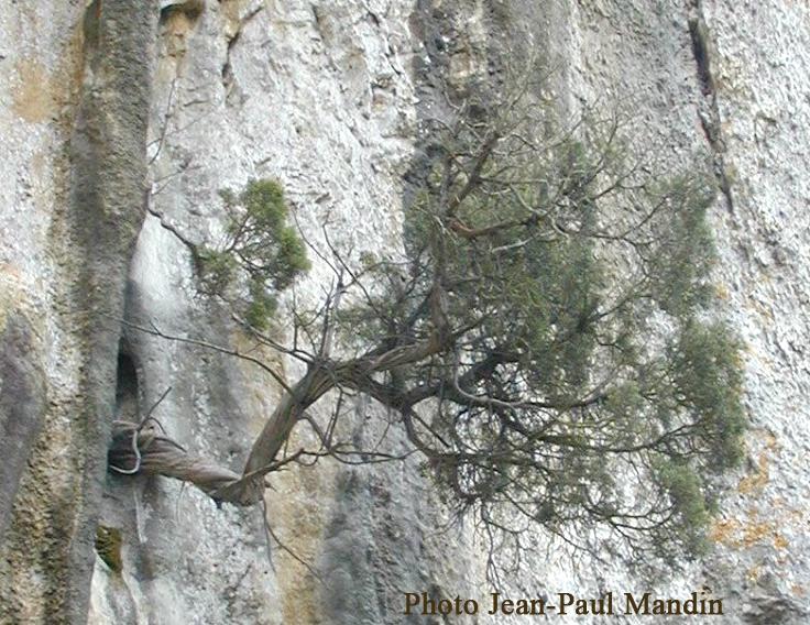 arbre-horizontal1.jpg