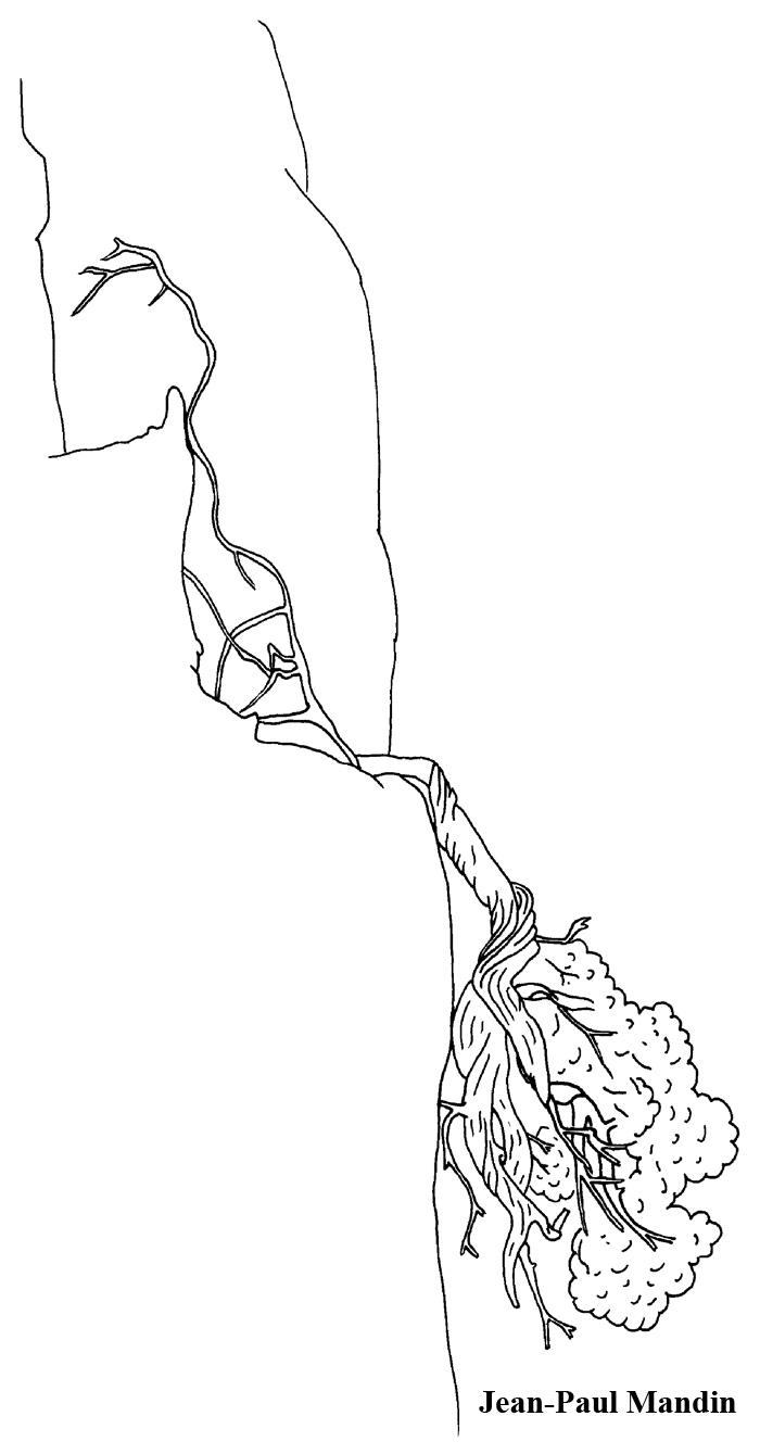 arbre-inverse-4-dessin.jpg
