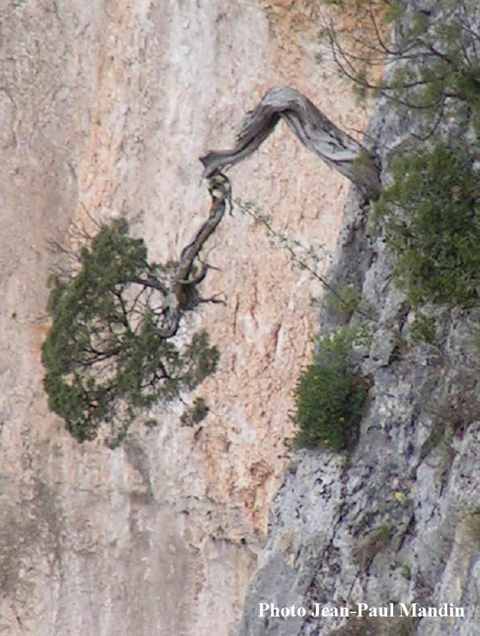 arbre-inverse3.jpg