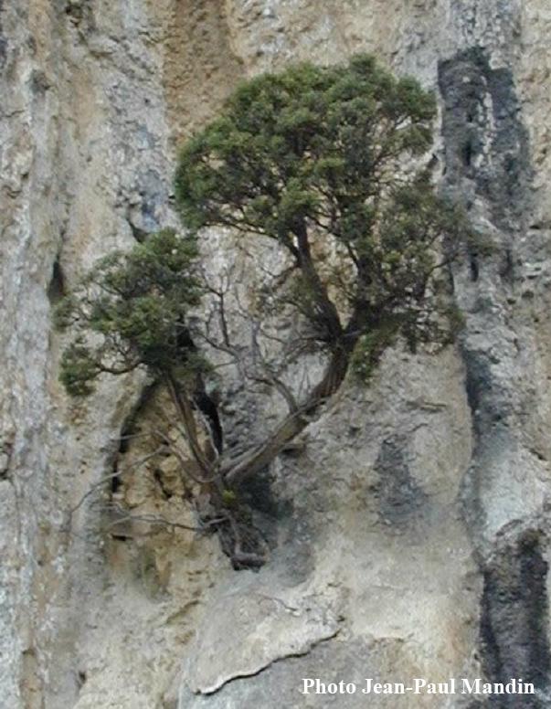 arbre-vertical1.jpg