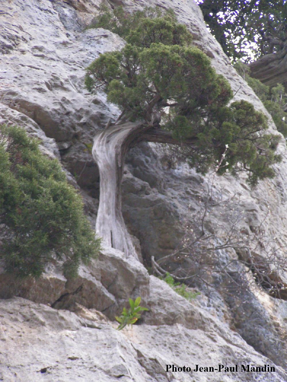 arbre-vertical2.jpg
