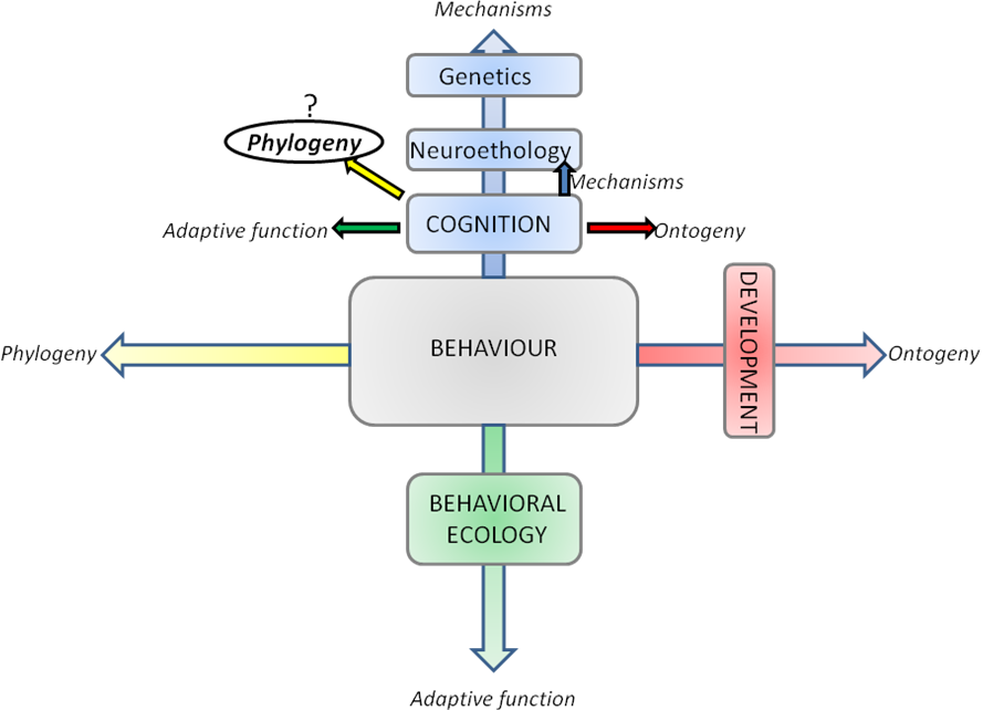 Schematic of the Tinbergen's four questions applied to the biological study of behavior.