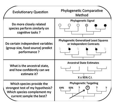 Different use of phylogeny for the study of phenotypic traits, including cognitive abilities.
