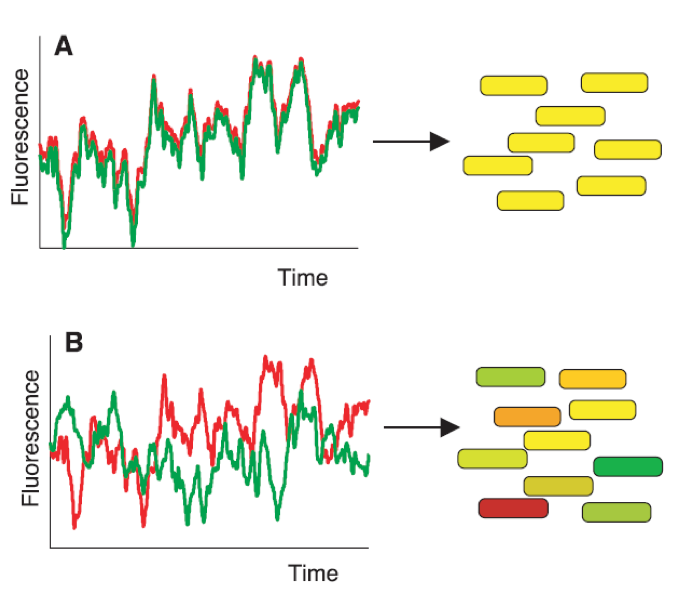 Two sources lead to variations in gene expression: intrinsic and extrinsic noise.