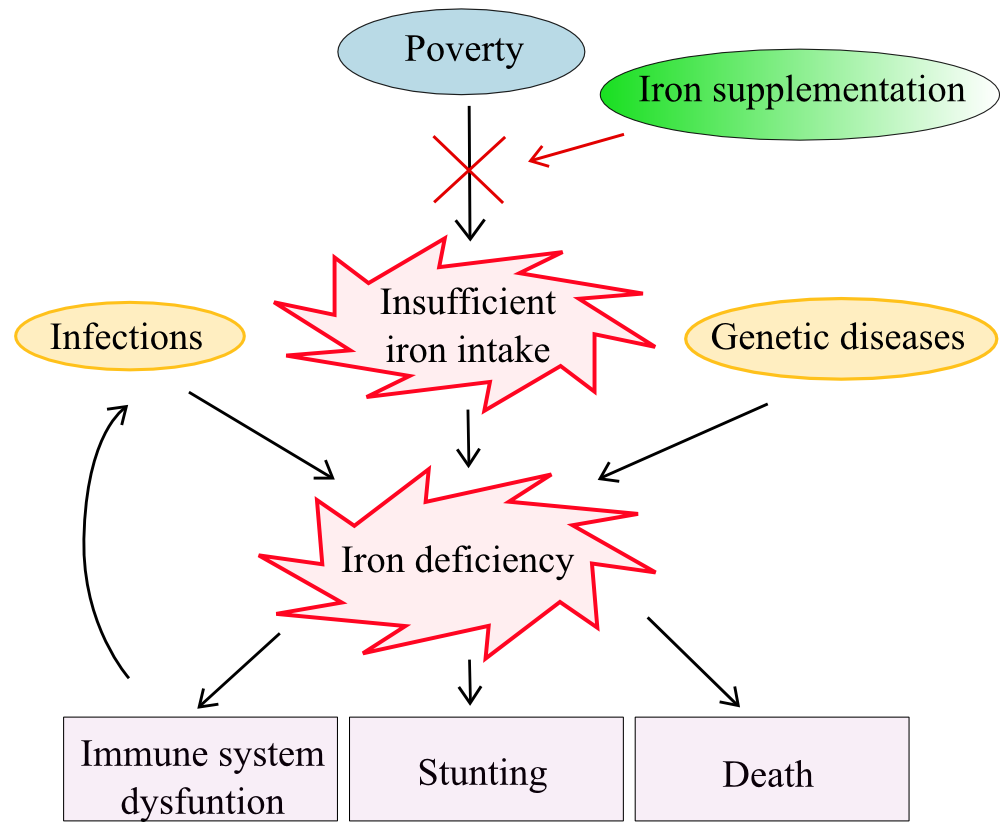 Causes and outcomes of ID and IDA in relation to nutritional programs.