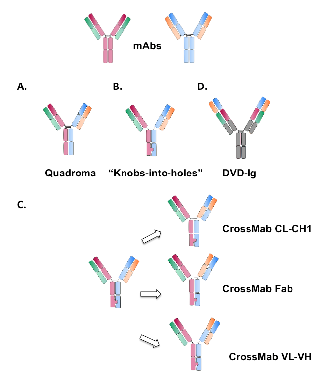 Schematic illustration of different formats of IgG-like bispecific antibodies.
