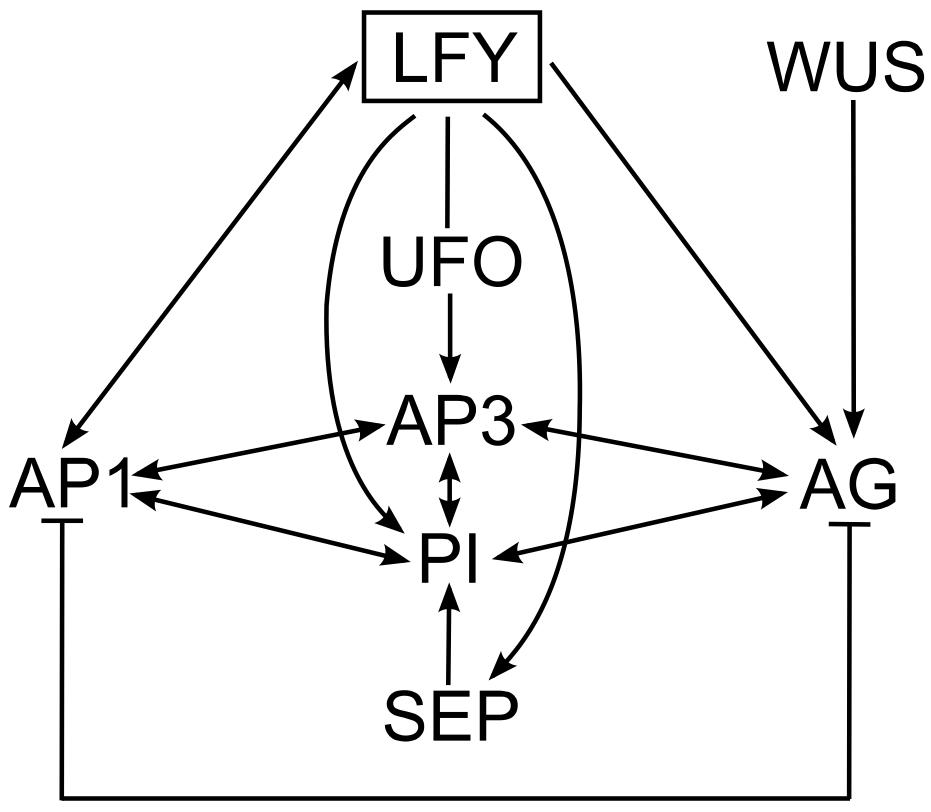 wuchel chart vibration