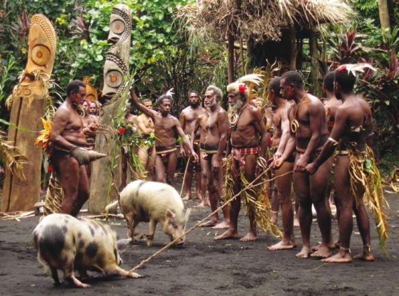 Photo d'une cérémonie de rétribution en cochons